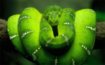 Укусы насекомых змей животных